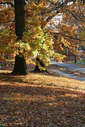 gorgeous-fall-shot